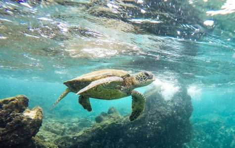 Without sea turtles, humans would be impacted negatively.