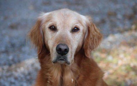 A loved dog.