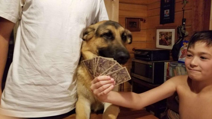 Snickers getting involved in a poker game.