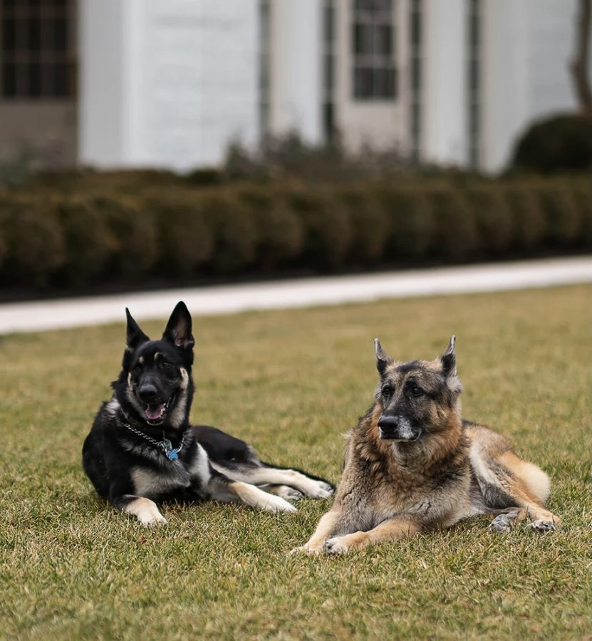 Why Joe Biden's Dogs Are Cool