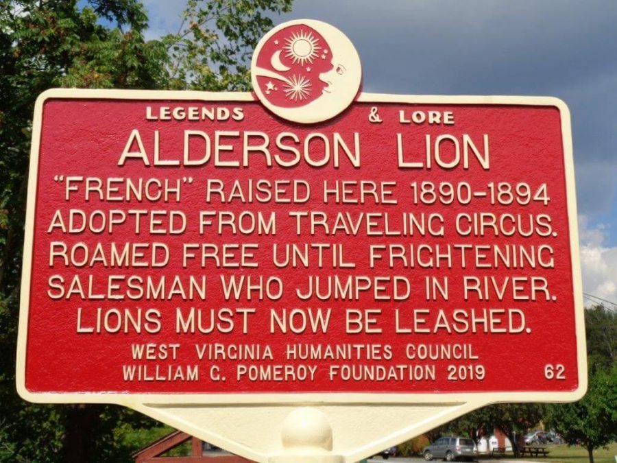 The Alderson Lion